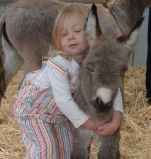 Pygmy Donkey as Guard Pet and Best Buddy » Reach Unlimited